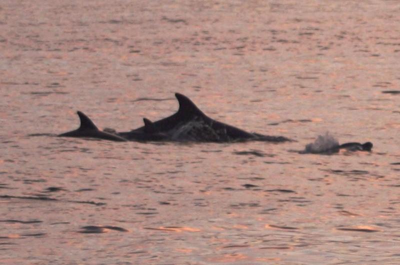 excursion Sunset dolphins tour